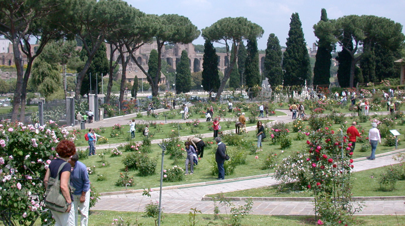 Rome\'s Rose Garden: a romantic\'s paradise by the Circus Maximus ...
