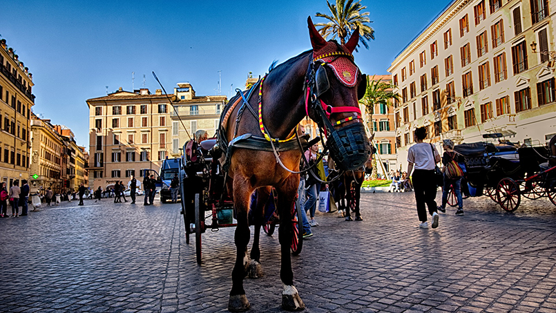 Rome's horse-drawn carriages: the botticelle