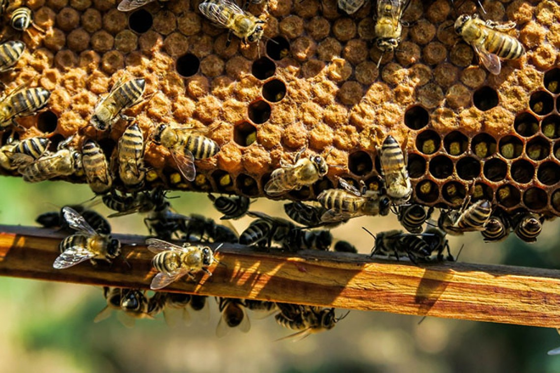 Grabees Urban Beekeeping moneymaking Rome Italy